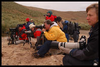 Photographers lined up for a look at Rockhopper Penguins