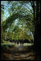 Tree-lined path leading to the wedding location